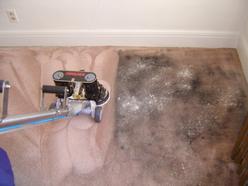 Carpet Cleaning Ferntreegully