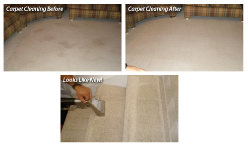 Carpet Steam Cleaning Ferntreegully